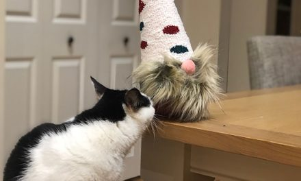 Make a sock gnome
